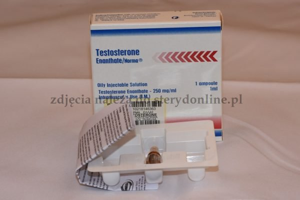 Testosterone Enanthate Norma